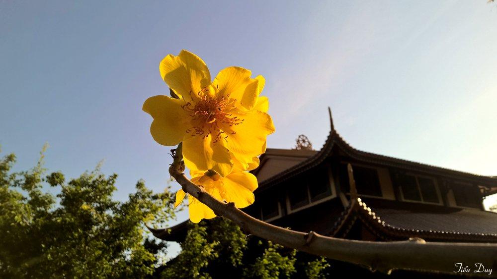 Vẻ đẹp của Thiền Viện Trúc Lâm Chân Nguyên những ngày cuối năm