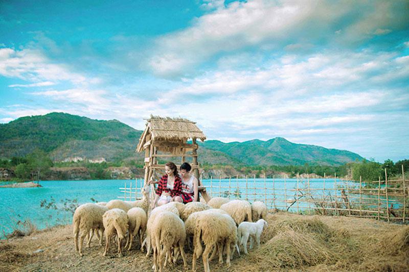 Khu du lịch ở Long Hải - Nông trại cừu