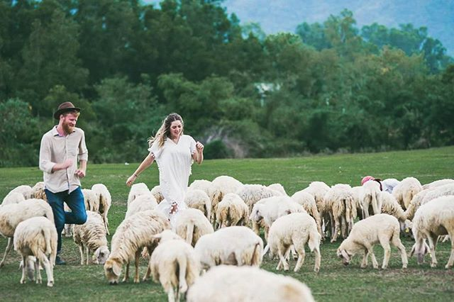 Đồng cừu suối nghệ Vũng Tàu - Ảnh 5
