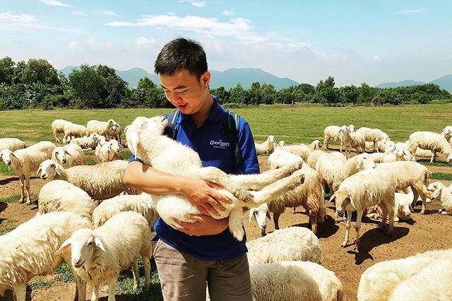 Đồng cừu suối nghệ Vũng Tàu - Ảnh 7
