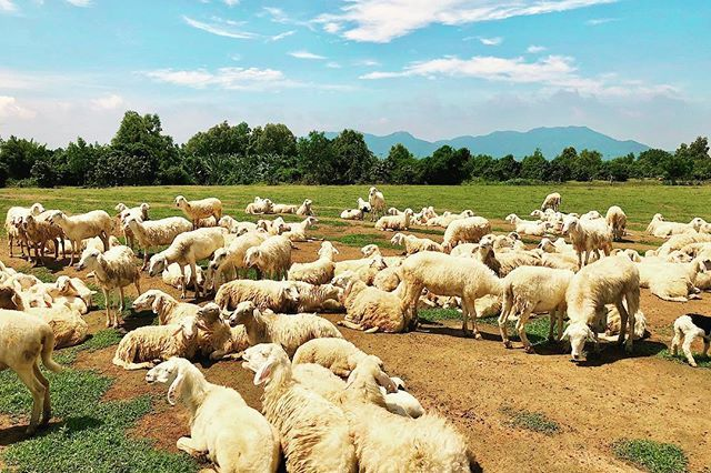 Đồng cừu suối nghệ Vũng Tàu - Ảnh 8